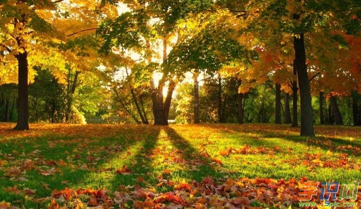 描写秋天的树叶的作文评语图片