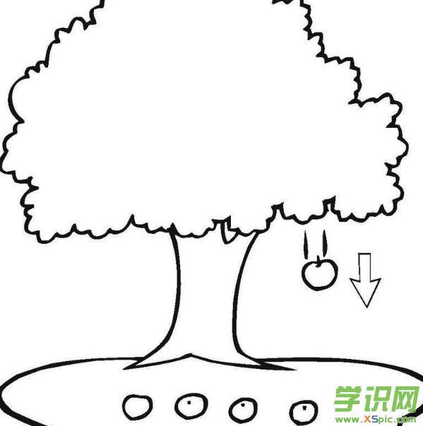 树的简笔画怎么画_树的简笔画步骤