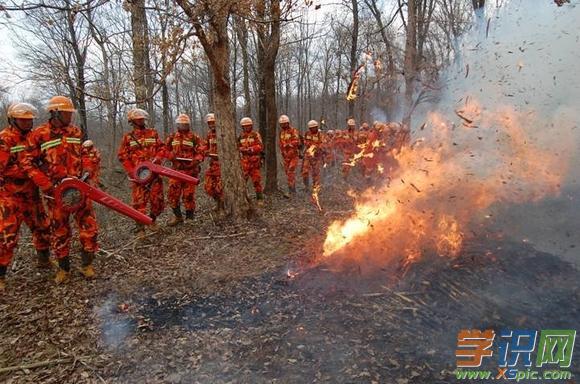六年級數學練習|六年級關于森林防火作文4篇