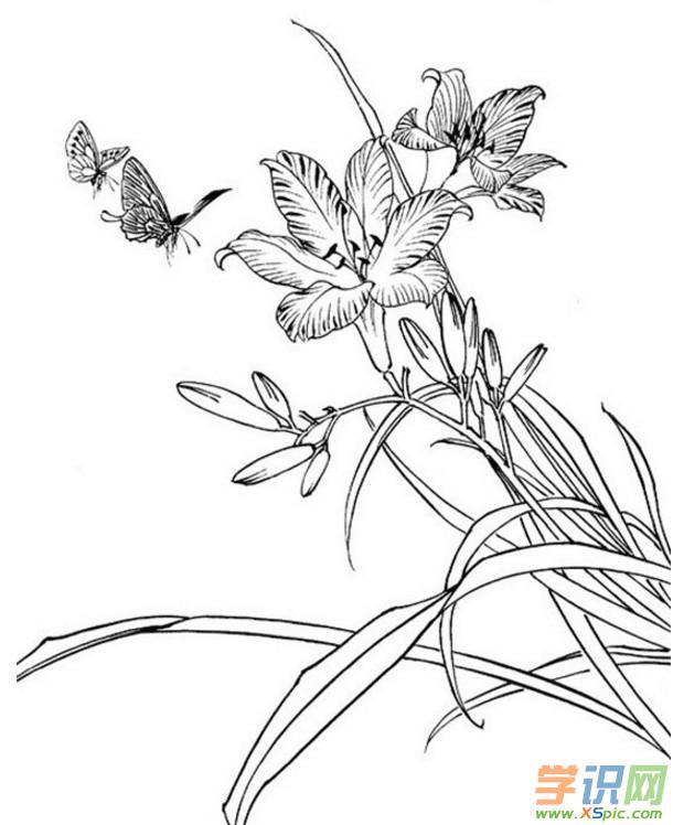 工笔画花鸟白描底稿高清图片