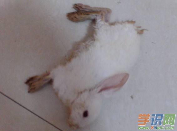 梦见兔子在家乱跑