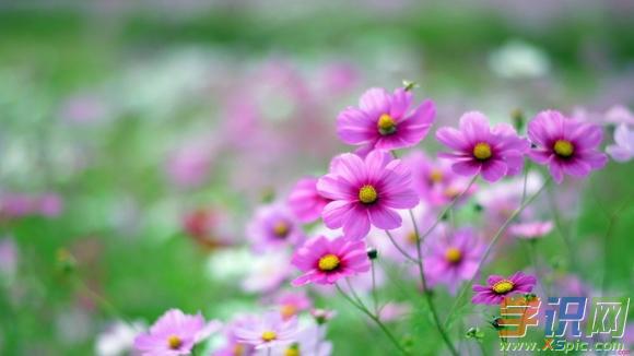 春天优美散文关于春天的优美句子_春天优美散文_关于春天的优美散文