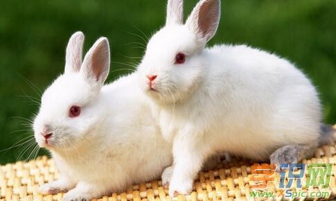 4、二月羊女同五月兔男的婚配:属羊和属兔相配吗?女属羊和男属兔配吗?