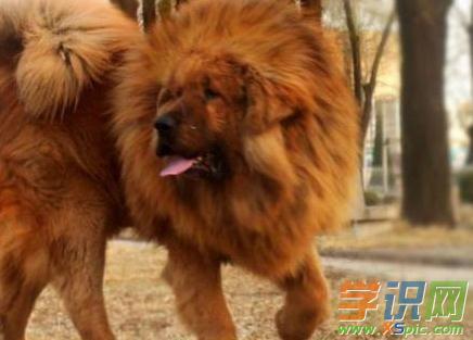 世界名狗价格排名_世界上最贵的名狗排名