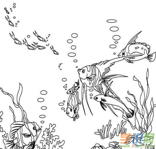 海底动物简笔画图片_海底动物卡通简笔画