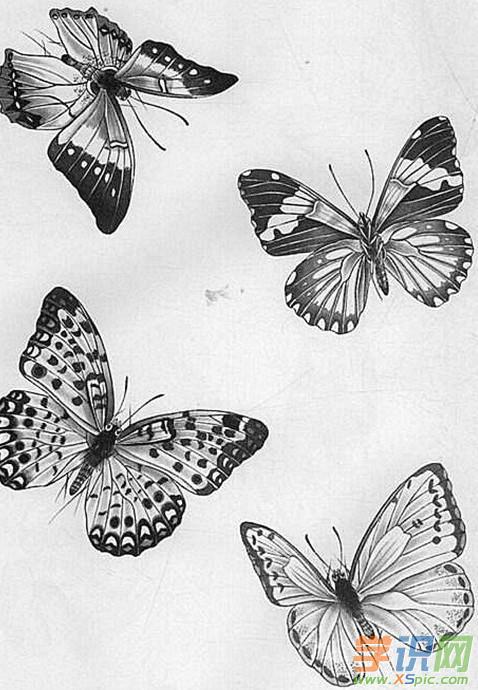 工笔画蝴蝶的画法 工笔画蝴蝶的图片