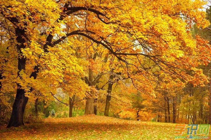 秋季,一年四季的第三季,由夏季到冬季的过渡季,阴历为7月立秋到9月立冬,阳历为9至11月,天文为秋分到冬至。以下是学识网网小编为大家整理的有关秋天的词语:   琨玉秋霜 比喻坚贞劲烈的品质   落叶知秋 看到地上的黄叶就知道秋天来临。比喻通过某一迹象便可预测形势的发展变化   明察秋毫,不见舆薪 目光敏锐,可以看清鸟兽的毫毛,而看不到一车柴草。比喻为人精明,只看到小节,看不到大处   暗送秋波 旧时比喻美女的眼睛象秋天明净的水波一样。指暗中眉目传情。   百岁千秋 一百年,一千载。形容岁月漫长,历时很