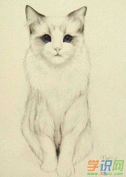 狗狗猫咪铅笔画 动物铅笔画大全