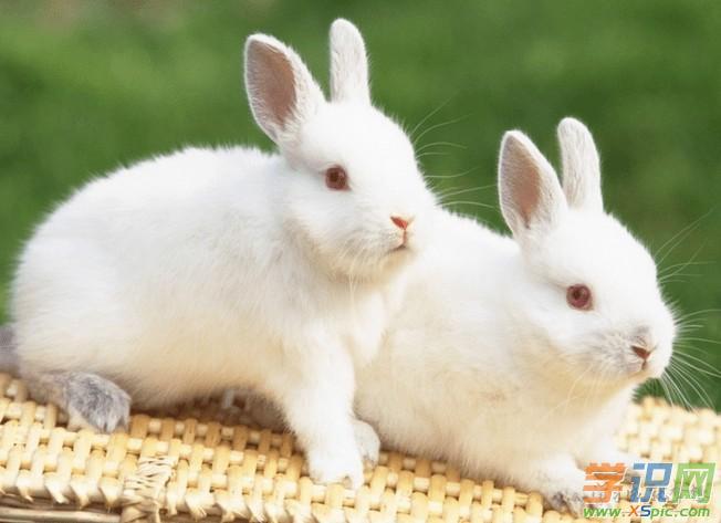 男属兔女属兔配吗