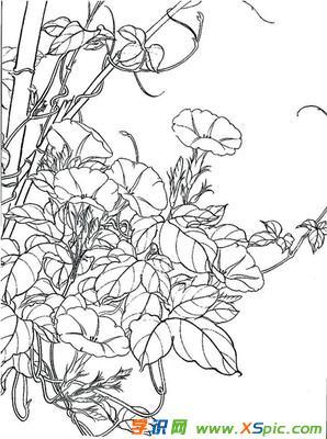花卉手绘图片铅笔画 手绘花卉图片大全