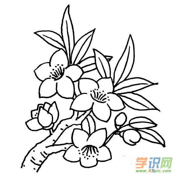 玫瑰花简笔画步骤图      本文地址:http://www.xspic.