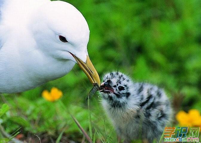 写动物母爱的作文3篇
