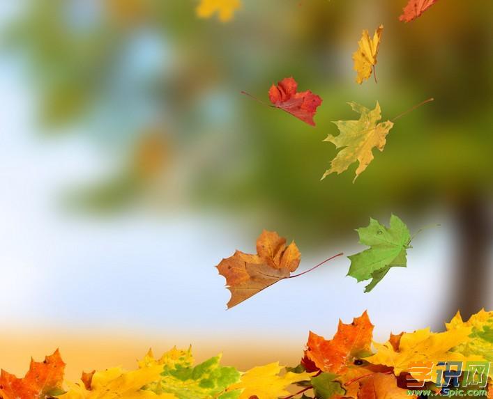 以秋天的叶子为话题的高中作文800字图片