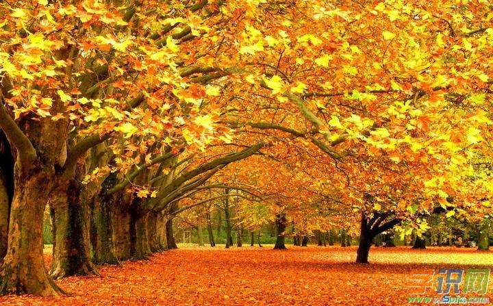 描写秋天的成语   梧桐一叶落:梧桐落叶最早,故以之表示秋天来临。后亦以比喻事物衰落的征兆。   秋风扫落叶:秋天的大风把落叶一扫而光。比喻强大的力量迅速而轻易地把腐朽衰败的事物扫除光。   秋荼密网:荼:茅草上的白花。秋天繁茂的茅草白花,网眼细密的鱼网。比喻刑罚繁苛。