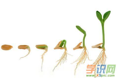种子生长过程简笔画图片 绘画种子的生长过程步骤