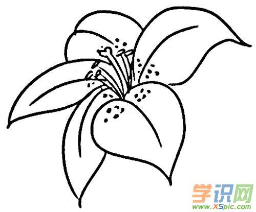 简笔画植物图画素材
