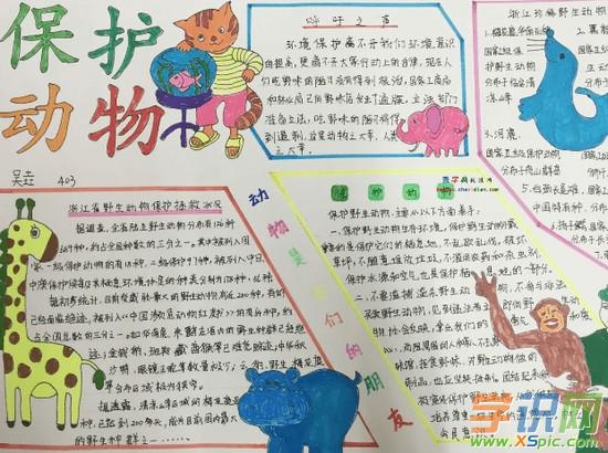 爱护动物英语手抄报内容_2017爱护动物英语手抄报精美