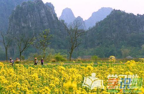 阳春马兰风景图片_阳春马兰风景资料