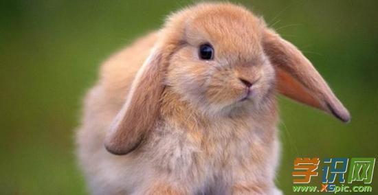 1、48岁牛46岁兔合婚配吗:牛和兔相配吗