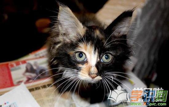 可爱图片动物图片_可爱图片小猫咪超清图片