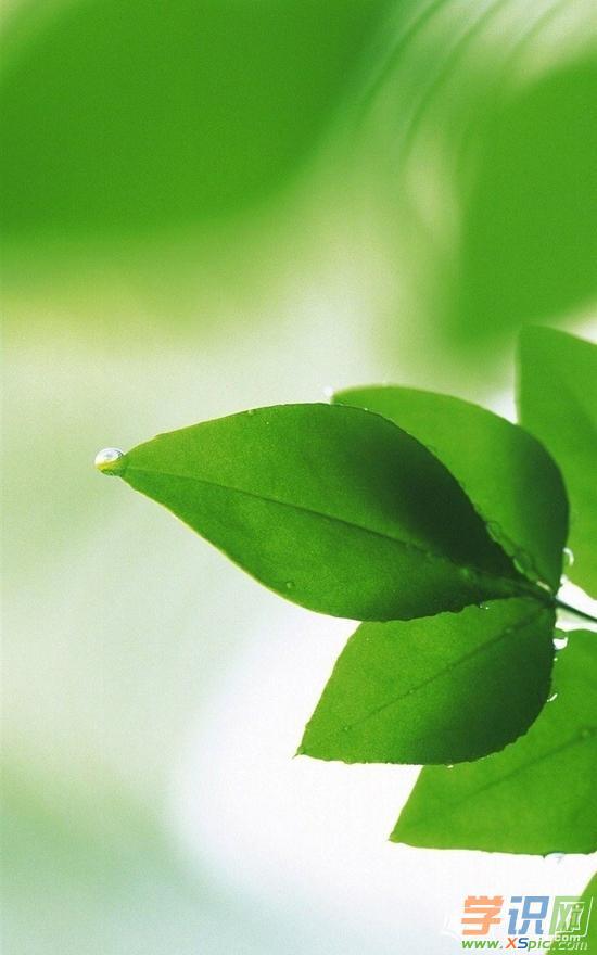 绿色护眼桌面壁纸高清全屏  4.励志桌面壁纸高清护眼  5.