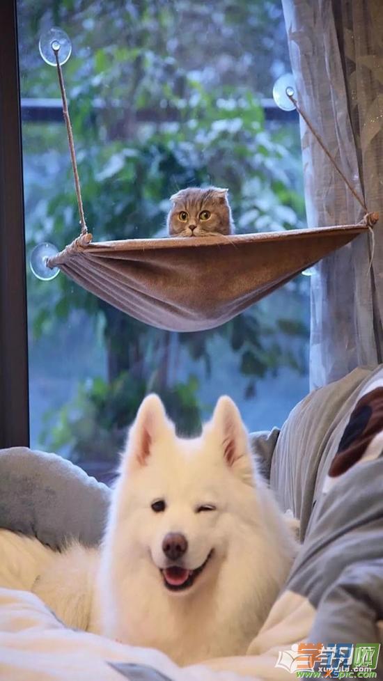 萌宠猫咪高清手机壁纸_萌猫手机高清壁纸
