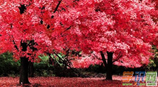 描写秋天的风景作文300字精选例文