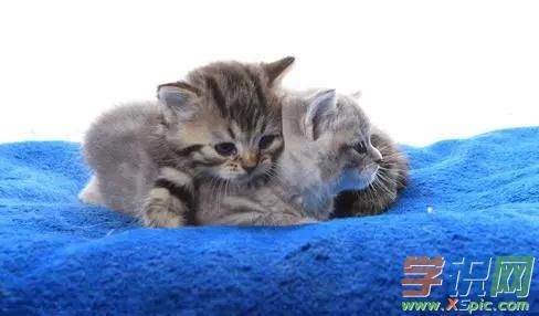 梦见抱着猫是什么意思
