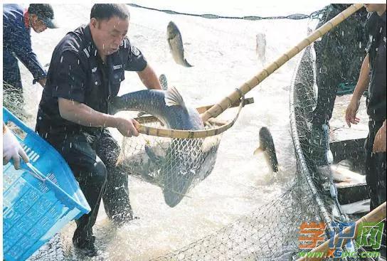 孕妇梦见别人抓鱼是什么意思