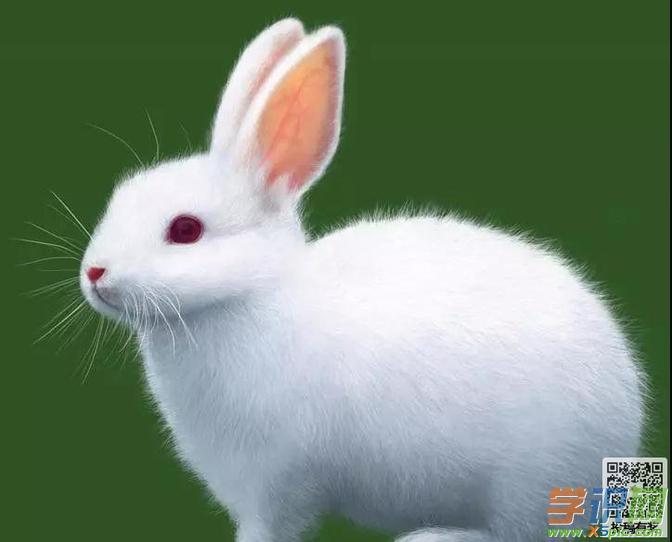 梦见兔子跑进屋是什么意思