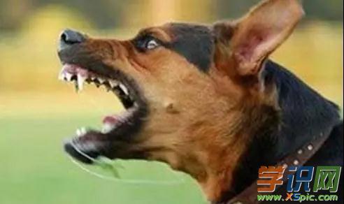 梦见听到狗叫有什么含义