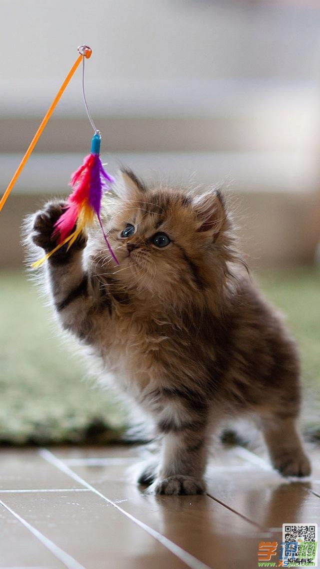 萌猫手机壁纸小清新可爱图片