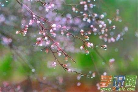 有关春雨的学生随笔:春天的小雨点