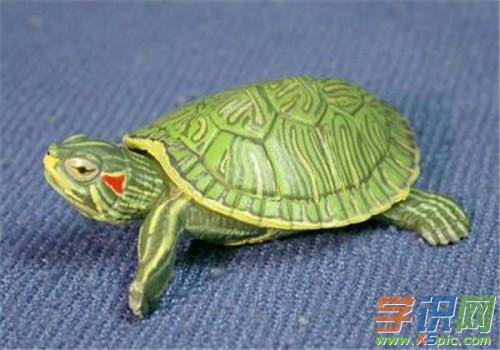 巴西龟适合的温度是多少