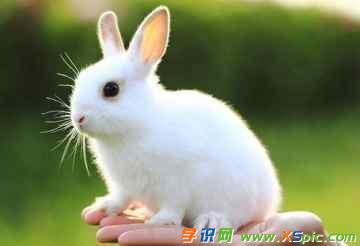 有关小动物的作文:我家的小白兔