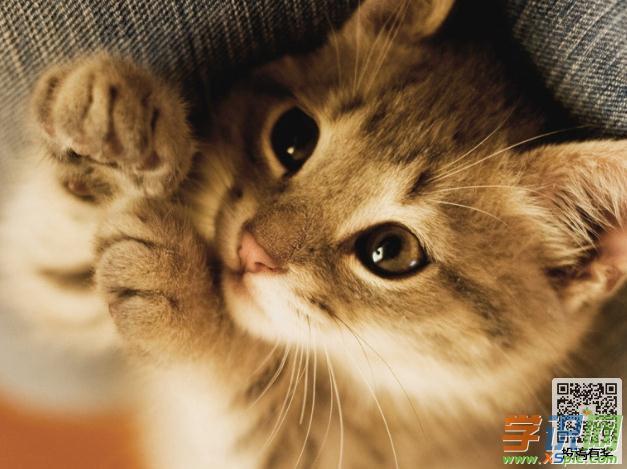 学识网:《可爱的小猫》写的是小作者家里的两只可爱的小喵.
