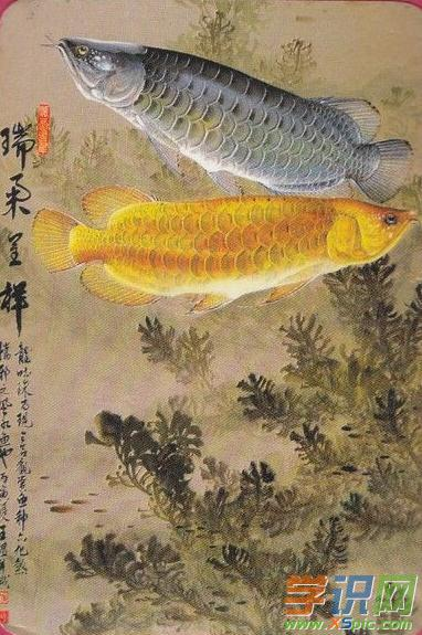 关于小鱼绘画图片大全