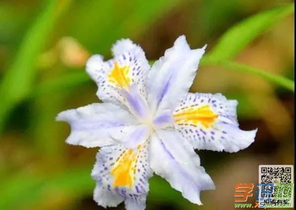梦见兰花开得很茂盛什么意思