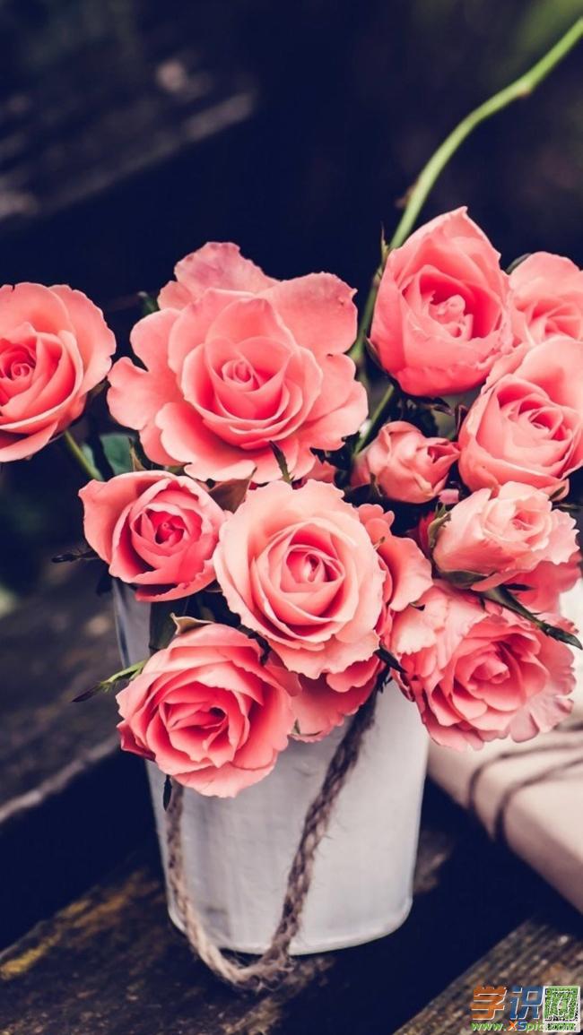 手机壁纸花卉植物图片
