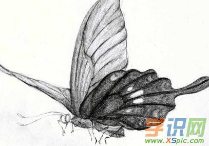 蝴蝶铅笔画图片大全