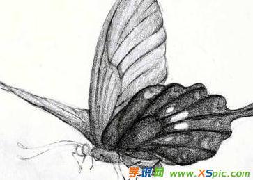 蝴蝶的铅笔画图片澳门葡京网站
