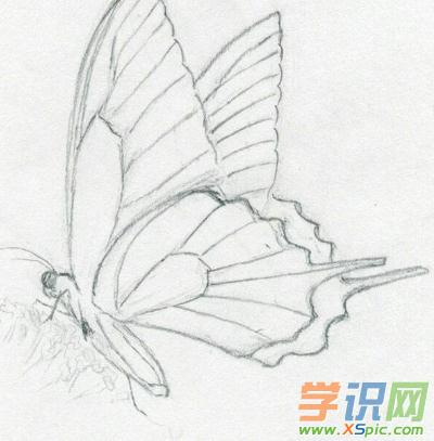 蝴蝶铅笔画图片