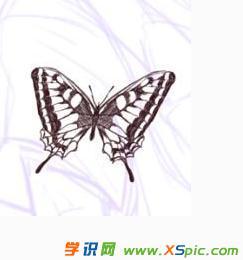 蝴蝶铅笔画的图片