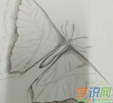 蝴蝶铅笔画的图片大全