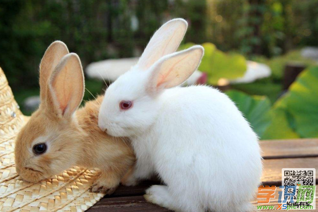 描写兔子的作文:我和小动物