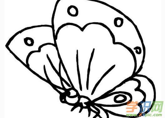 小蝴蝶简笔画图片