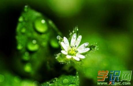 赞美春雨的小学作文:春雨的欢乐颂