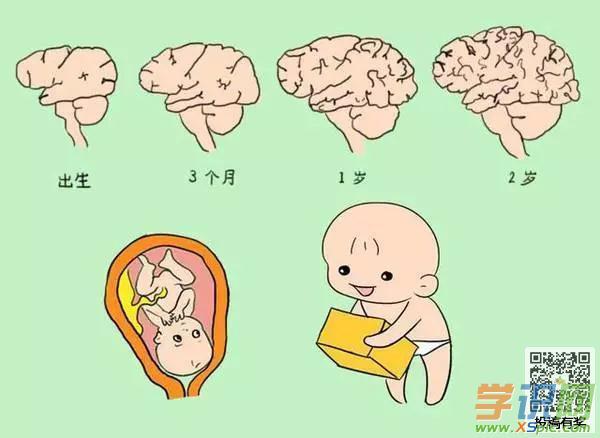 影响胎儿大脑发育的四大因素