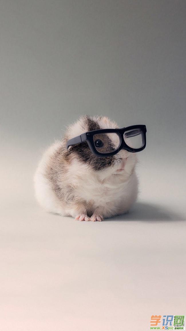 可爱图片动物手机壁纸