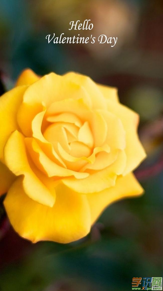玫瑰花高清手机壁纸图片